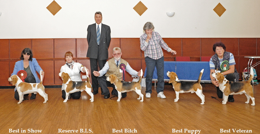 Best in Show           Reserve B.I.S.             Best Bitch                        Best Puppy             Best Veteran