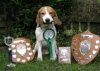 Miles with some of his obedience wins
