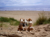Molly, Miles and Milly enjoy their favourite beach at Irvine